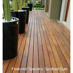 86 X 19MM DECKING QLD SPOTTED GUM STD H3 PER LM